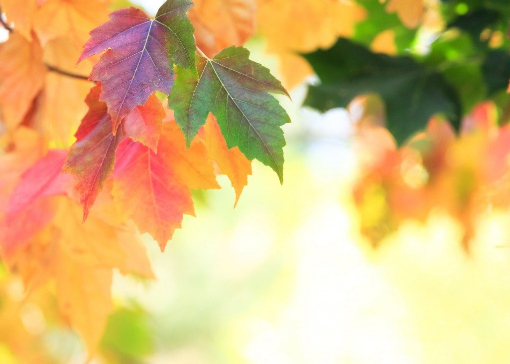 leaves during fall